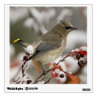 Adult Cedar Waxwing on hawthorn with snow, 3 Wall Sticker