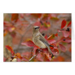 Adult Cedar Waxwing on hawthorn with snow, 4 Greeting Cards