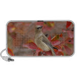 Adult Cedar Waxwing on hawthorn with snow, 4 Mini Speakers