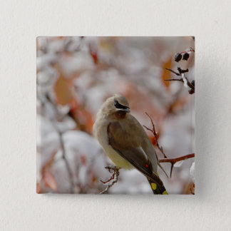 Adult Cedar Waxwing on hawthorn with snow, Button