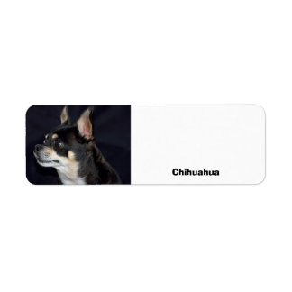 Adult Chihuahua Dog Label