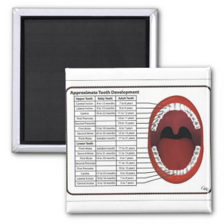 Adult/Child Tooth Eruption Timetable 2 Inch Square Magnet