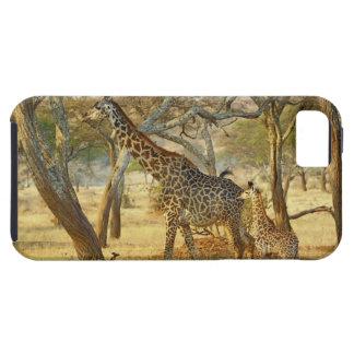 Adult female and juvenile Giraffe, Giraffa iPhone SE/5/5s Case