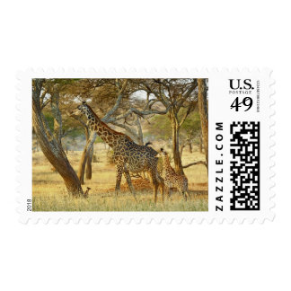 Adult female and juvenile Giraffe, Giraffa Postage