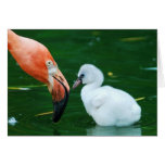 Adult Flamingo and chick Greeting Card. Card