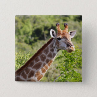 Adult Giraffe Face and Neck Button