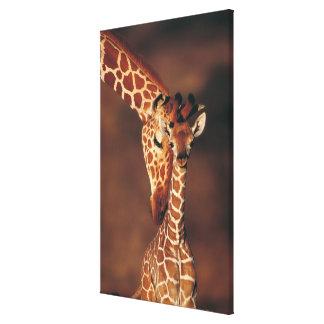 Adult Giraffe with calf (Giraffa camelopardalis) Gallery Wrap Canvas