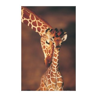 Adult Giraffe with calf (Giraffa camelopardalis) Gallery Wrap Canvas