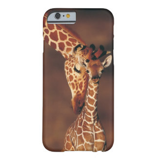 Adult Giraffe with calf (Giraffa camelopardalis) Barely There iPhone 6 Case