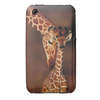 Adult Giraffe with calf (Giraffa camelopardalis) iPhone 3 Case-Mate Cases