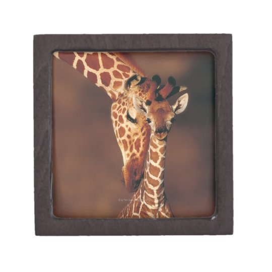 Adult Giraffe with calf (Giraffa camelopardalis) Jewelry Box