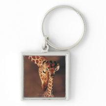 adult giraffe with calf giraffa camelopardalis keychain p146525317817486472b2su2 216 jeannie millar nude and sex scenes jeannie millar sex .
