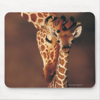 Adult Giraffe with calf (Giraffa camelopardalis) Mouse Pad