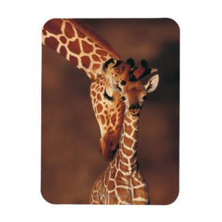Adult Giraffe with calf Giraffa camelopardalis Magnet