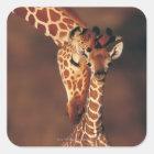 Adult Giraffe with calf (Giraffa camelopardalis) Square Sticker