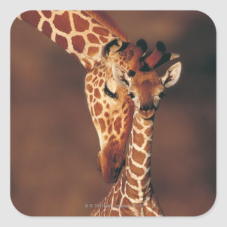 Adult Giraffe with calf (Giraffa camelopardalis) Square Sticker