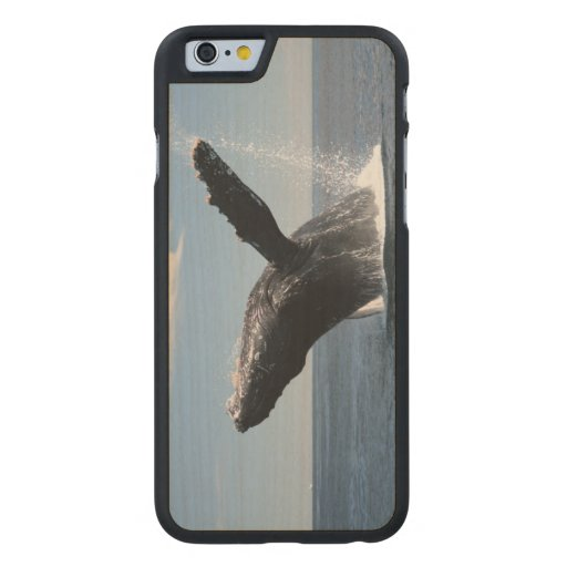 Adult Humpback Whale Breaching Carved® Maple iPhone 6 Slim Case