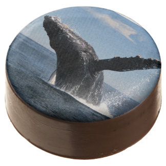 Adult Humpback Whale Breaching Chocolate Covered Oreo