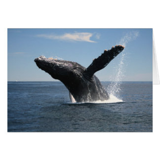 Adult Humpback Whale Breaching Greeting Card