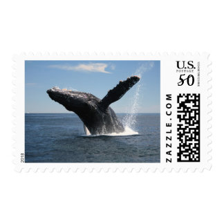 Adult Humpback Whale Breaching Postage