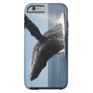 Adult Humpback Whale Breaching Tough iPhone 6 Case