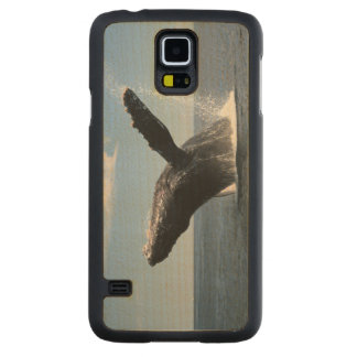 Adult Humpback Whale Breaching Carved® Maple Galaxy S5 Case