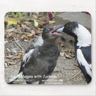 Adult Magpie with Juvenile Mouse Pad