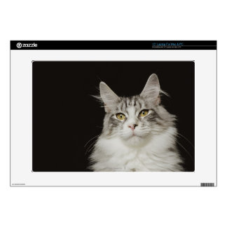 """Adult Maine Coon Cat Decals For 15"""" Laptops"""