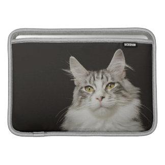Adult Maine Coon Cat MacBook Air Sleeves