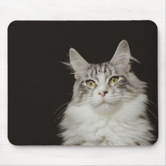 Adult Maine Coon Cat Mouse Pad