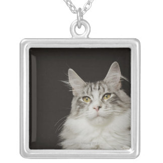 Adult Maine Coon Cat Silver Plated Necklace