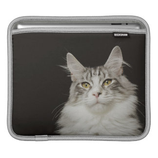 Adult Maine Coon Cat Sleeve For iPads