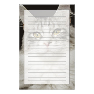 Adult Maine Coon Cat Stationery