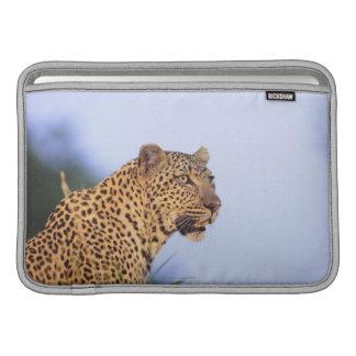 Adult male leopard (Panthera pardus) MacBook Air Sleeve