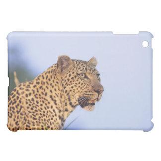Adult male leopard (Panthera pardus), resting on iPad Mini Case