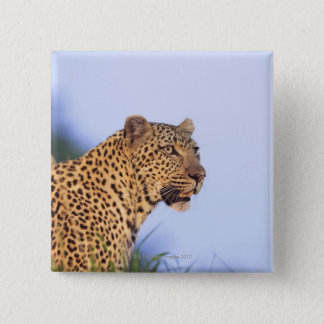 Adult male leopard (Panthera pardus), resting on Pinback Button
