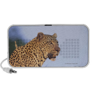 Adult male leopard (Panthera pardus) Laptop Speakers
