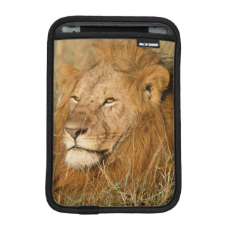 Adult male Lion at first light iPad Mini Sleeves