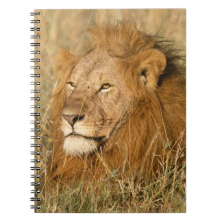 Adult male Lion at first light Notebook