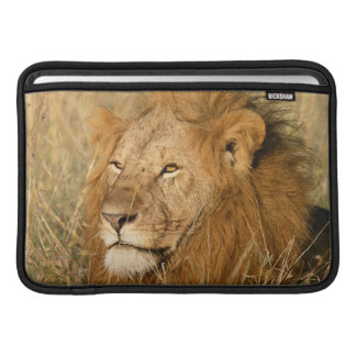 Adult male Lion at first light Sleeves For MacBook Air