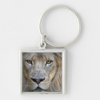 Adult male lion at the Sacramento Zoo, CA Key Chain