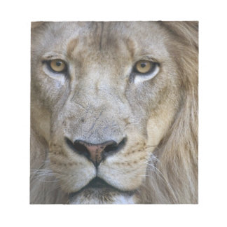 Adult male lion at the Sacramento Zoo, CA Notepad