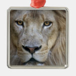 Adult male lion at the Sacramento Zoo, CA Christmas Tree Ornament