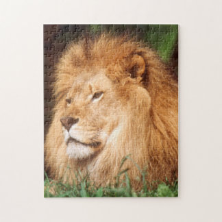 Adult male Lion Jigsaw Puzzle