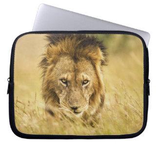 Adult male lion, Panthera leo, Masai Mara, Kenya Laptop Sleeve