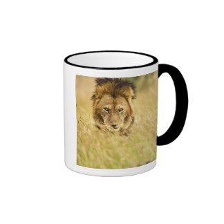 Adult male lion, Panthera leo, Masai Mara, Kenya Ringer Coffee Mug