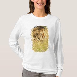 Adult male lion, Panthera leo, Masai Mara, Kenya T-Shirt