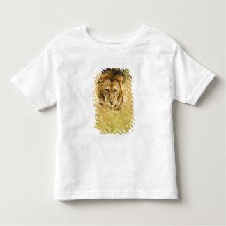 Adult male lion, Panthera leo, Masai Mara, Kenya Toddler T-shirt