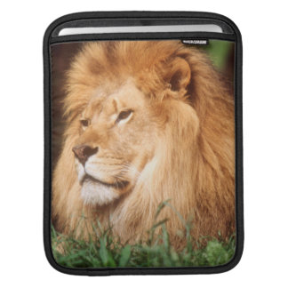 Adult male Lion Sleeves For iPads