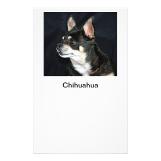 Adult pet Chihuahua Flyer